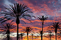 Palm Trees In The Sunset