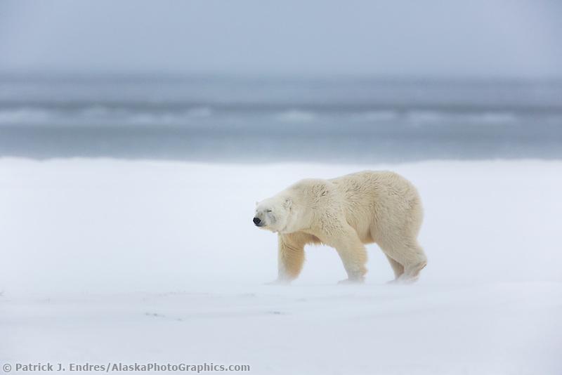 Barter Island, Arctic National Wildlife Refuge, Alaska.