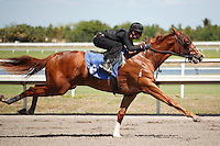 #6Fasig-Tipton Florida Sale,Under Tack Show. Palm Meadows Florida 03-23-2012 Arron Haggart/Eclipse Sportswire.