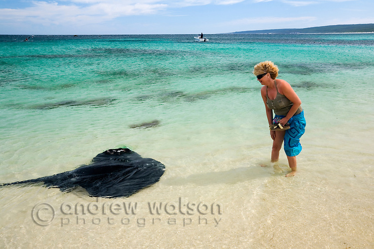 A friendly stingray and a holidaymaker at Hamelin Bay in the Leeuwin-Naturaliste National Park, Western Australia, AUSTRALIA.