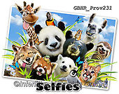 Howard, REALISTIC ANIMALS, REALISTISCHE TIERE, ANIMALES REALISTICOS, selfies, paintings+++++Llama Selfie,GBHRPROV231,#a#, EVERYDAY ,panda