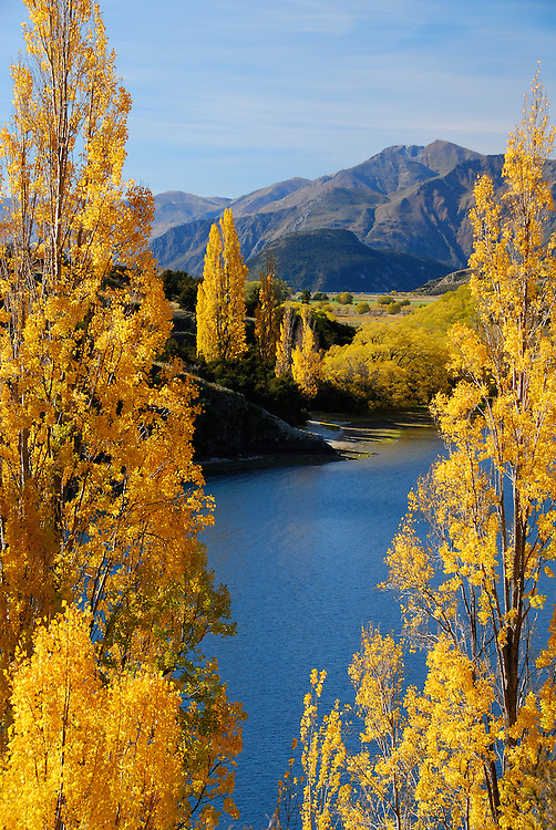 Autumn poplar trees next to Lake Wanaka, South Island, New Zealand - stock photo, fine art, canvas print