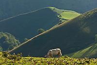 Europe/France/Aquitaine/64/Pyrénées-Atlantiques/Pays-Basque/Plateau d'Iraty : Pyrénées basques entre Mendive et Behorleguy