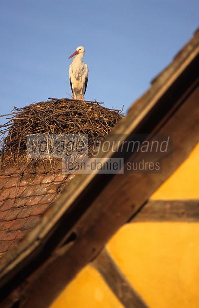 Europe/France/Alsace/68/Haut-Rhin/Ungershiem: Ecomusée d'Alsace - Détail cigogne