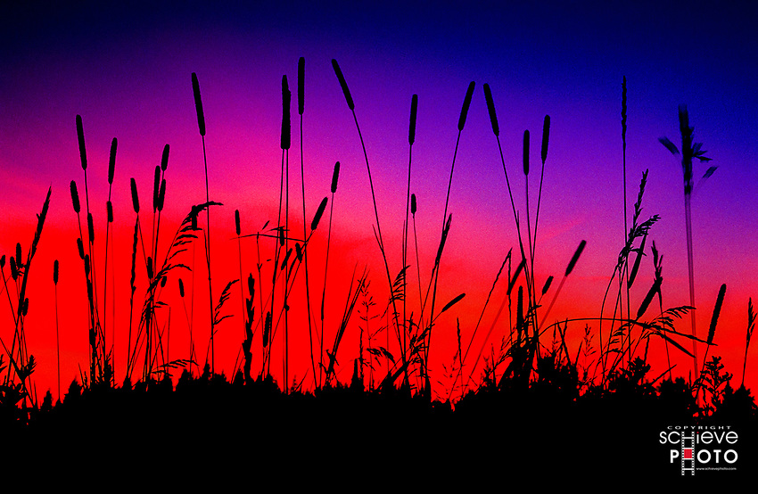 Granny grass against a glowing sky.