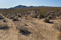 Tracks through the landscape of the Mojave Desert in California.