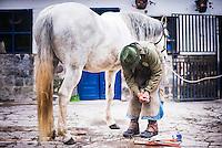 Stable man preparing a horsefor horse riding, Hacienda Zuleta, Imbabura, Ecuador, South America