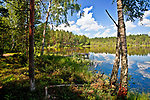 Kaszuby, 2011-07-05. Kaszubskie krajobrazy - jezioro w okolicach Wdzydz Kiszewskich