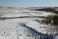 A team on the trail between Ophir and Iditarod during the 2011 Iditarod race..