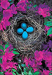 Robin's Nest, Washington<br />