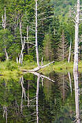 Reflection of forest in Wildlife Pond in Bethlehem, New Hampshire USA during the summer months.