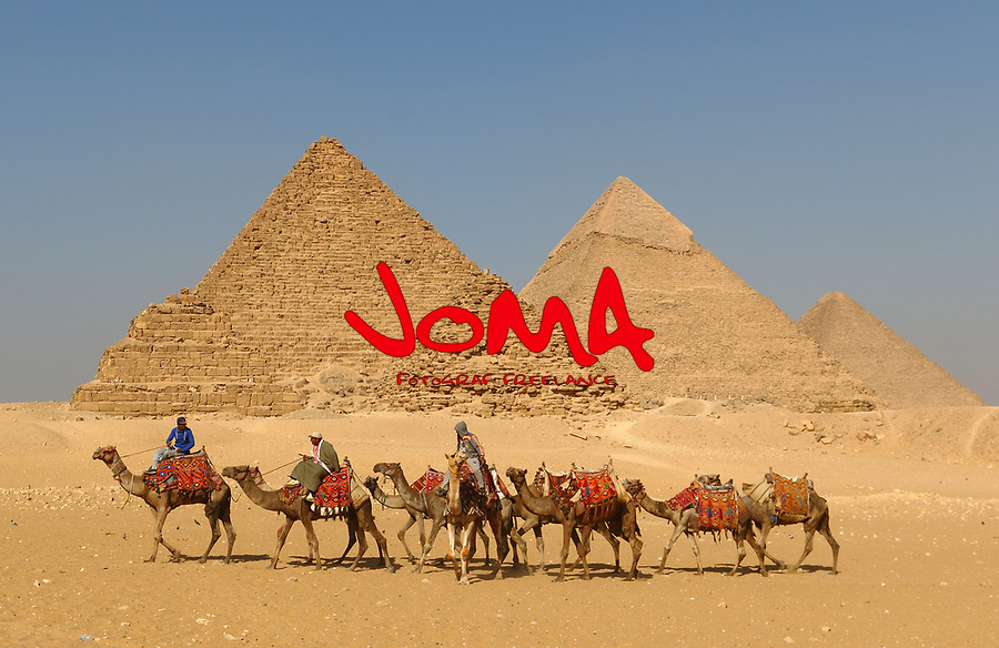 Group of camels crosses the Great Pyramids of Giza