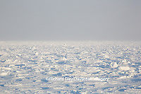 60595-01116 Hudson Bay ice pack at Cape Churchill Wapusk National Park, Churchill, MB