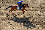May 15, 2019 : Bodexpress exercises as horses prepare for Preakness Week at Pimlico Race Course in Baltimore, Maryland. Scott Serio/Eclipse Sportswire/CSM