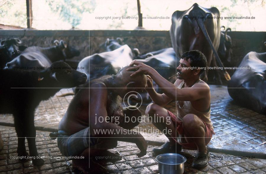 INDIA Mumbai, urban agriculture, stable with buffalos for milk production in living area in suburban Andheri, flying barber at work / INDIEN Mumbai, urbane Landwirtschaft, im Stadteil Andheri befinden sich Bueffelstaelle in Wohngebieten, nach dem Melken wird die frische Milch direkt verkauft