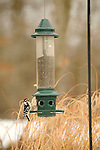 Bird Feeder with downy woodpecker.