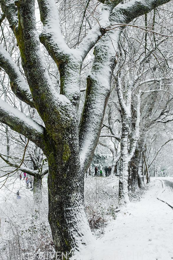 Winter trees & sledders