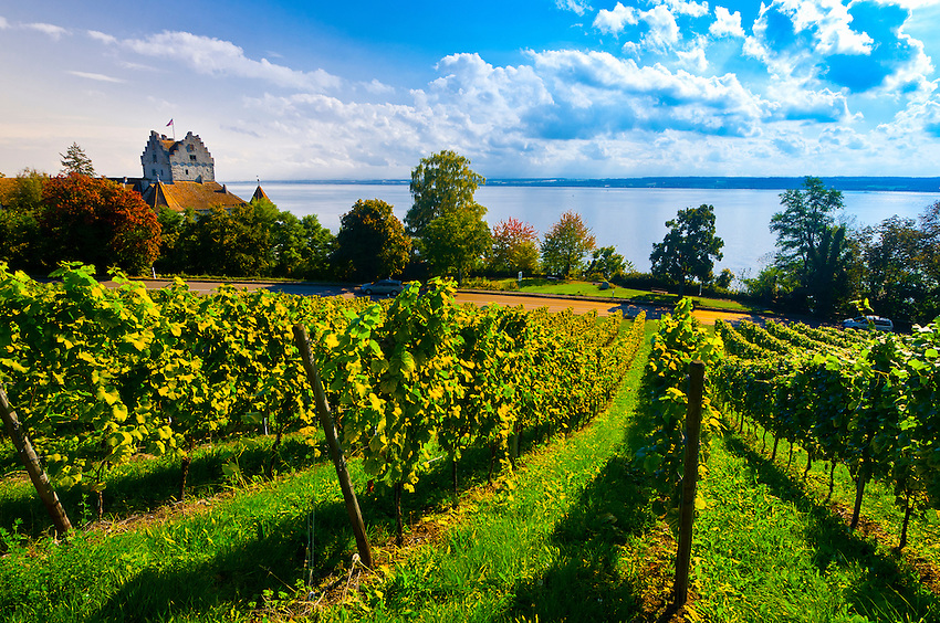 Vineyards, the medieval city of Meersburg on Lake Constance (Bodensee), Baden-Württemberg, Germany