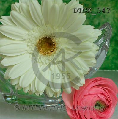 Gisela, FLOWERS, photos(DTGK343,#F#) Blumen, flores, retrato