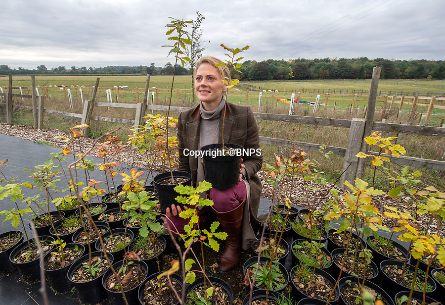 BNPS.co.uk (01202 558833)<br /> Pic: PhilYeomans/BNPS<br /> <br /> Rural manager Rachel Brodie with some of the oak saplings from the ancient trees.<br /> <br /> Ancient oaks harvested for tiny acorns...<br /> <br /> Foresters at Blenheim Palace have painstakingly gathered 3,000 acorns in a bid to guarantee the future of Europe's largest gathering of ancient oak trees.<br /> <br /> They were picked up in High Park, a wooded area of the 2,000 acre Blenheim Estate in Oxon, Sir Winston Churchill's birthplace.<br /> <br /> It was originally created by Henry I as a deer park in the 12th century, with some surviving trees still standing 900 years on.<br /> <br /> The tiny oaks are currently being raised in glasshouses and small plantations and will eventually be planted across the estate.<br />  <br /> It is hoped the saplings, all direct descendants of the original trees, will help ensure the legacy of Blenheim's ancient oaks lives on for centuries to come.