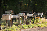 A row of mailboxes on a road near Marble, Colorado