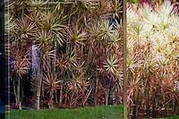 Brumadinho_MG, Brasil...ardim no Centro de Arte Contemporanea Inhotim (CACI) em Brumadinho, Minas Gerais...The garden in the Inhotim Contemporary art Center (CACI) in Brumadinho, Brumadinho, Minas Gerais...Foto: JOAO MARCOS ROSA /  NITRO