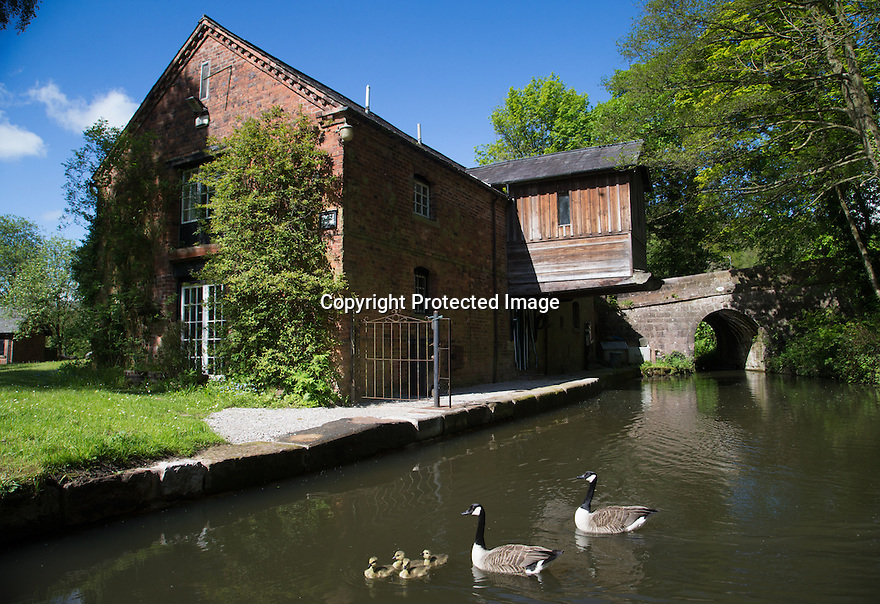 23/05/16 <br /> <br /> A family of canada geese in this morning's sunshine at Froghall Wharf, in the Churnet Valley near Cheadle at the end of the Cauldon Canal in Staffordshire. <br /> <br /> <br /> All Rights Reserved: F Stop Press Ltd. +44(0)1335 418365   +44 (0)7765 242650 www.fstoppress.com