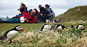 THE BESSIE ELLEN TRAVEL FEATURE.<br /> Atlantic Puffins in their mating plumage on the island of Lunga in the Inner Hebrides, Scotland<br /> Photo:Clare Kendall<br /> 19/05/2016.