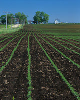 Lee County, IL<br /> Soy beans germinating in a field of black soil