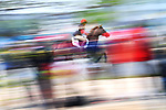 Ho Yuen Yan Annie (HKG), Ambience shot, <br /> AUGUST 25, 2018 - Equestrian : Eventing Team and Individual Dressage at Jakarta International Equestrian Park during the 2018 Jakarta Palembang Asian Games in Jakarta, Indonesia. <br /> (Photo by MATSUO.K/AFLO SPORT)