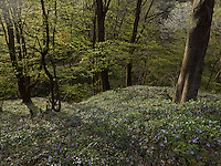 FOREST_LOCATION_90195