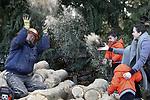 Foto: VidiPhoto<br /> <br /> LEERSUM &ndash; Terwijl opa De Jong uit Leersum maandag een poging doet om 50 kuub hout voor de komende winters weg te zagen en te kloven, vragen zijn kleinkinderen tijdens de eerste dag van de voorjaarsvakantie de nodige aandacht. En wat is er nu mooier dan opa te bedekken met zaagsel of op de minitractor het gekloofde hout weg te brengen. Nu de gaskraan op termijn dichtgedraaid wordt, zoeken steeds meer mensen naar alternatieve verwarming. De Jong heeft zijn dak vol liggen met zonnepanelen, maar moet daarnaast bijverwarmen. Hout geldt als groene stroom cq verwarming. Bovendien is het rendement van houtkachels de laatste jaren enorm toegenomen, alsmede de populariteit er van.