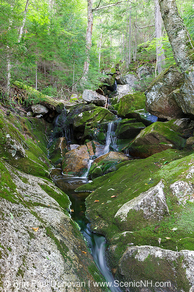A section of Fleming Flume on Elephant Head Brook in Carroll, New Hampshire during the summer months.