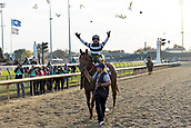 3rd November, 2018, Churchill Downs, Louisville, Kentucky, USA; Accelerate with Joel Rosario up after winning the Breeders Cup Classic. Churchill Downs racecourse.