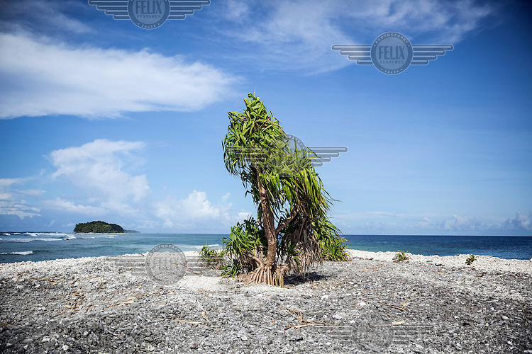 A mangrove tree grows on the Southern tip of the Funafuti Atoll. Tuvalu has a population just over 10,000 people, most of whom live in the country's capital Funafuti. Increasing urbanisation, along with climate change, pose big threats to this tiny Pacific country. Migration from the outer islands to the main island of Fongafale is placing increasing pressure on water supplies and land availability, while employment opportunities in the small formal sector are limited. Moreover, stronger 'King Tides', Saltwater intrusion into the groundwater and extreme weather events are making this island nation one of the most vulnerable countries in the world. The country's Prime Minister had asked Australia and New Zealand to consider taking in Tuvaluans when the low-lying islands eventually become uninhabitable.