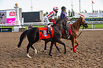 September 19, 2020: #7 Value Proposition (GB), ridden by Luis Contreras and trained by Chad Brown heads to the post for the Grade 1 Ricoh Woodbine Mile at Woodbine Racetrack in Toronto, Ontario, Canada.