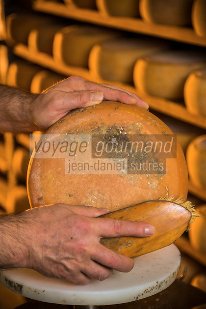 Italie, Val d'Aoste, Val d'Ayas,  Brusson : Fromagerie du Haut Val d'Ayas<br /> Affinage du Fromadzo, fromage de lait de vache// Italy, Aosta Valley,  Brusson: Fromagerie du Haut Val d'Ayas, Refining Fromadzo, cheese from cow's milk<br /> AUTO N°: 2013-158