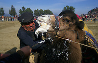 Selcuk, Turkey, 21/01/01..The traditional sport of camel wrestling is popular throughout western Turkey in the winter months; the largest event is the annual festival held in Selcuk on the third weekend of January. A trainer struggles with his camel at the start of a match.