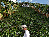 Coffee Plantation -Zona Cafeteria - Colombia