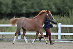 Class 1. Pre-Senior. In-hand. Showing. Brook Farm Training Centre. Essex. UK. 09/09/2018. ~ MANDATORY Credit Garry Bowden/Sportinpictures - NO UNAUTHORISED USE - 07837 394578
