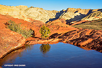 Frozen pond up high in Snow Canyon