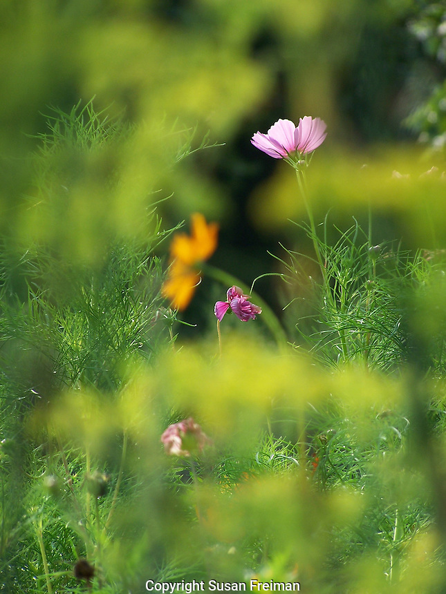 Flowers, August, Gardens and Farms,
