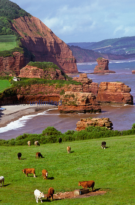 Coastal erosion with cliff and stacks. Note vegetation growing on stacks. Ladram Bay, South Devon, England. Photographer G. R. 'Dick' Roberts © Natural Sciences Image Library.