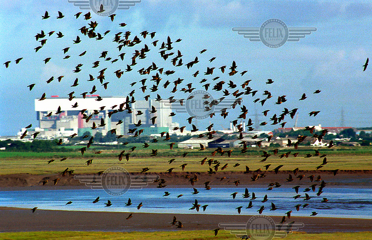 A flock of birds fly near Heysham Nuclear Power Station. There are four nuclear reactors built in two stations next to each other at Heysham. They have a combined output of 2400 MW, which is enough energy to supply most of northwest England.