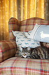 Tabby cat sitting on traditional lounge chair