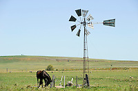URUGUAY grazing land with small wind mill and horse