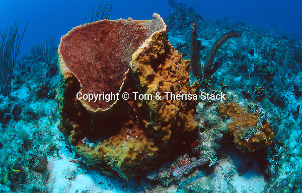 Giant Barrel Sponge, Biscayne National Park, Florida
