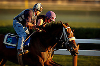 ©Mitch Wojnarowicz Photographer.Saratoga Springs NY An exercise rider takes a horse for a morning workout at sunrise at the thoroughbred horse racing track here..20030823.Not a royalty free image. COPYRIGHT PROTECTED.www.mitchw.com.www.mitchwblog.com.518 843 0414_Mitchw@nycap.rr.com.ANY USE REQUIRES A WRITTEN LICENSE.NO Model release for this image