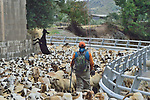 SPAIN 2018 IVAN TAIRN SHEEP AND GOATS ON THE WAY TO THE TEST RIVER