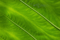 Background - details of a leaf